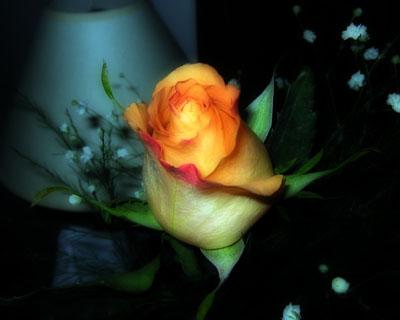rose_101304.jpg